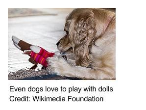 Dogs love to play with dolls