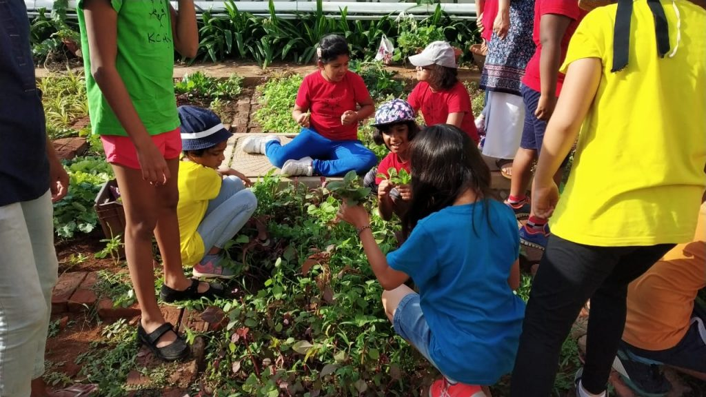 KC High International School Grade 3 Students Gardening Program