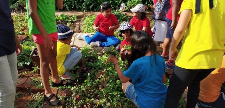 KC High International School Grade 3 Students Gardening Program
